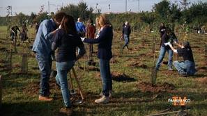 Timberland Earth Day, 2000 alberi per Bergamo