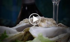 Fish&wine street food, Feudi lancia Nave Errante